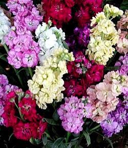 画像 : 5月6日の花と❀花言葉❀著...