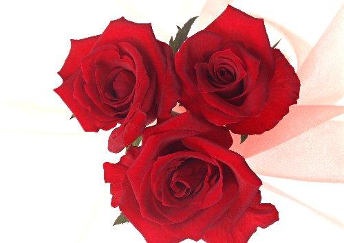 3本のバラ