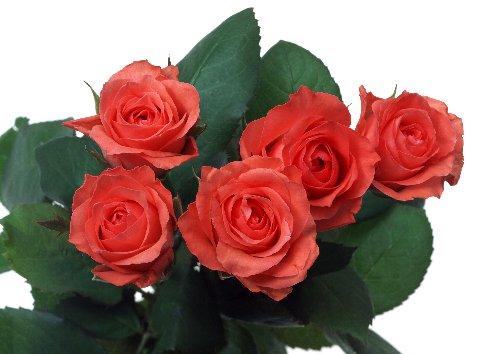 5本のバラ